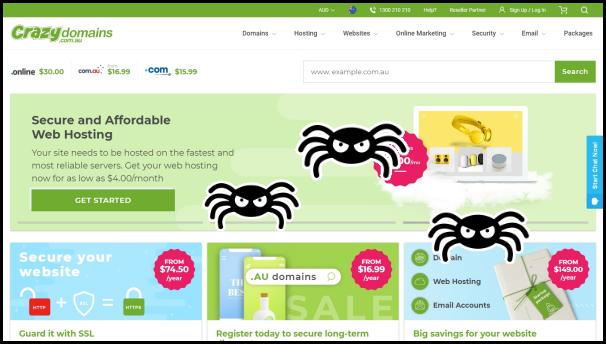 spider crawling on website